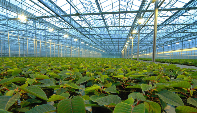 Plant Tracking: From Nursery to Distribution