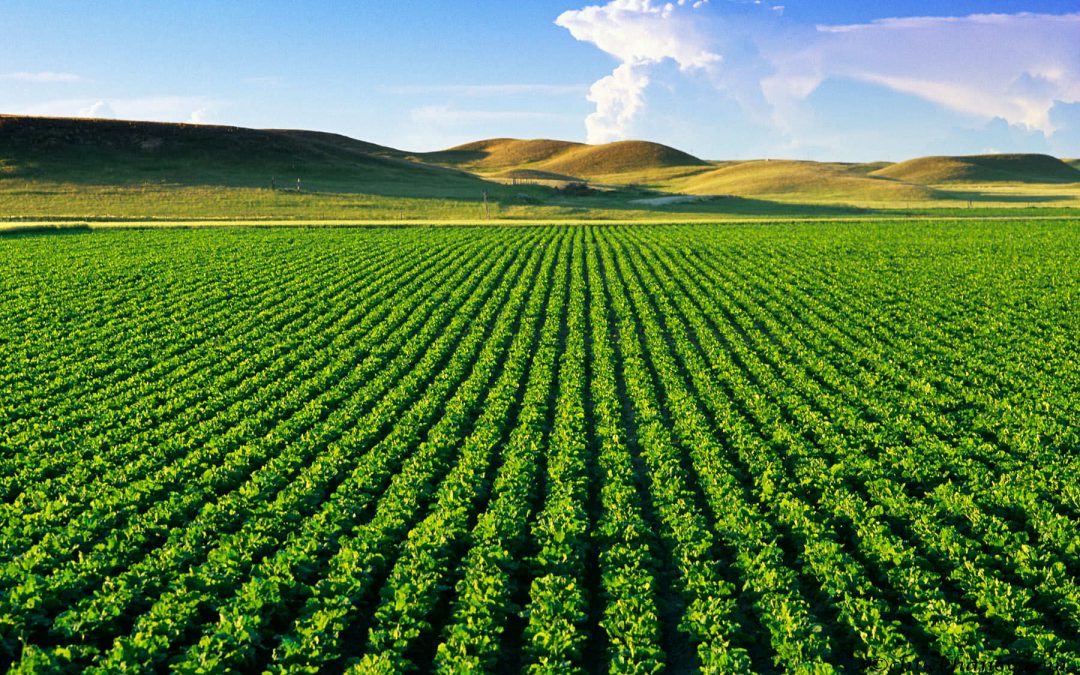 The Future of Food: IoT and Food Security