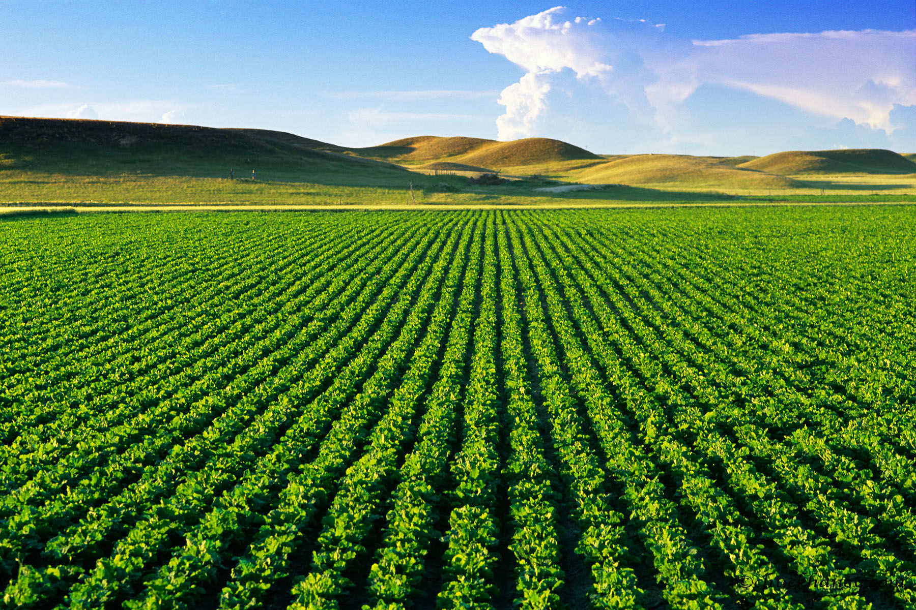 Smart Farming Food Security